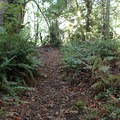 Side paths found along the trail to access Deep Lake.- Nolte State Park, Deep Lake