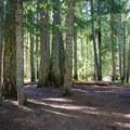 The sites are surrounded by fir and cedar trees.- Grasshopper Meadows Campground