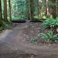 Some easy rolling trails.- Duthie Hill Park
