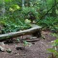Log bridges.- Duthie Hill Park