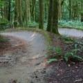 Banked trails.- Duthie Hill Park