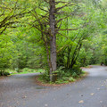 Road through Beckler River Campground.- Beckler River Campground