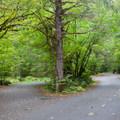Road through Beckler River Campground.- Beckler River Campground
