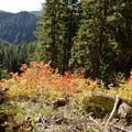 Olallie Trail.- Olallie Trail