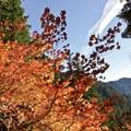 Fall color on Olallie Trail.- Olallie Trail