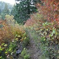 The section of trail north of Horsepasture Meadow has stunning fall color in addition to expansive views.- Olallie Trail