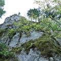 This cliff formation is near the bottom of the downhill at the northern end of the Olallie Trail.- Olallie Trail
