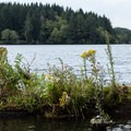 The banks of Tahkenitch are dense, and there are relatively few places to stop and explore.- Tahkenitch Lake