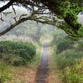 Portions of the trails are paved.- Port Orford Heads State Park Trails