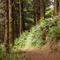 The trail to Nellie's Cove.- Port Orford Heads State Park Trails