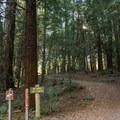 The Sprig Lake Trail.- Sprig Lake Trail