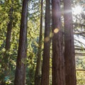 Sunlight streaming through redwoods on the Sprig Lake Trail.- Sprig Lake Trail
