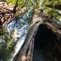 Sprig Lake Trail.- Sprig Lake Trail
