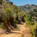 Hiking trail in Rancho San Antonio Open Space Preserve.- Rogue Valley + Wildcat Loop