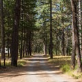 Middle Fork Campground is lined by pine trees.- Middle Fork Campground