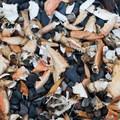 Crab shells scattered along the beach on James Island.- James Island Sea Kayaking