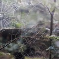 Spiderwebs hang from the trees in the dense forests that cover the island.- James Island Sea Kayaking