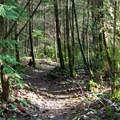 Mountain bike park- Paradise Valley Conservation Area