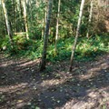 Bike park's network of trails.- Paradise Valley Conservation Area