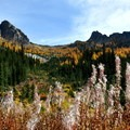 Fall fireweed in the meadow.- Blue Lake Hike