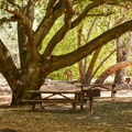 Shaded picnic areas in Anderson Lake County Park.- Serpentine Trail