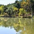 The trail along Coyote Creek.- Serpentine Trail