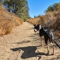 Dogs are allowed on leash.- Serpentine Trail