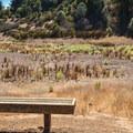 Dry lake bed.- Lakeview + Grey Pines Loop, Rosendin Park