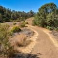 Grey Pines Trail.- Lakeview + Grey Pines Loop, Rosendin Park