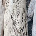 Driftwood piles up on the beach at Jones Island.- Jones Island Sea Kayaking