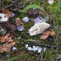 Mussel and oyster shells in the woods on Jones Island.- Jones Island Sea Kayaking