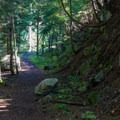 Forest surrounding the Bygone Byways Interpretive Trail.- Bygone Byways Interpretive Trail