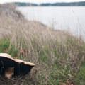 Unidentified species (help us identify it by providing feedback).- Posey Island Sea Kayaking