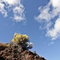 The ubiquitous sage and lava rock on Peterson Ridge make for interesting scenery.- Peterson Ridge Trail System