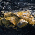 Lichen-covered rocks line the beaches of Blind Island.- Blind Island Sea Kayaking