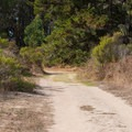 The Monarch Trail is easy to walk.- Monarch Trail Hike