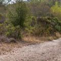 Where the wetlands start.- Monarch Trail Hike