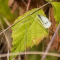 Unidentified species (help us identify it by providing feedback).- Monarch Trail Hike