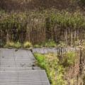 A path through the wetlands.- Monarch Trail Hike