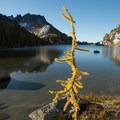 A lone western larch (Larix occidentalis) at Perfection Lake in the Enchantments.- Enchantment Lakes Hike via Snow Lakes