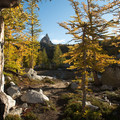 Western larch (Larix occidentalis) in the Enchantments.- Enchantment Lakes Hike via Snow Lakes