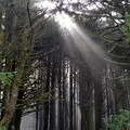 Sunlight streaming through the dense coastal forest.- Neptune State Scenic Viewpoint