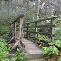 Trail leading upstream along Cummins Creek.- Neptune State Scenic Viewpoint