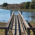 Boardwalk into the slough.- Long Valley + Five Fingers Loop