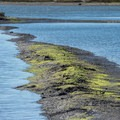 A mudflat in the slough.- South Marsh Loop