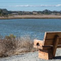 Elkhorn Slough National Estuarine Research Reserve.- South Marsh Loop
