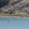 Plenty of wildlife viewing opportunities.- Elkhorn Slough