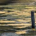 Elkhorn Slough National Estuarine Research Reserve.- Elkhorn Slough