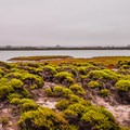 Early morning at Moss Landing State Beach.- Elkhorn Slough