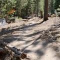 The Castle Rock Loop leads through ponderosa pines.- Castle Rock Loop